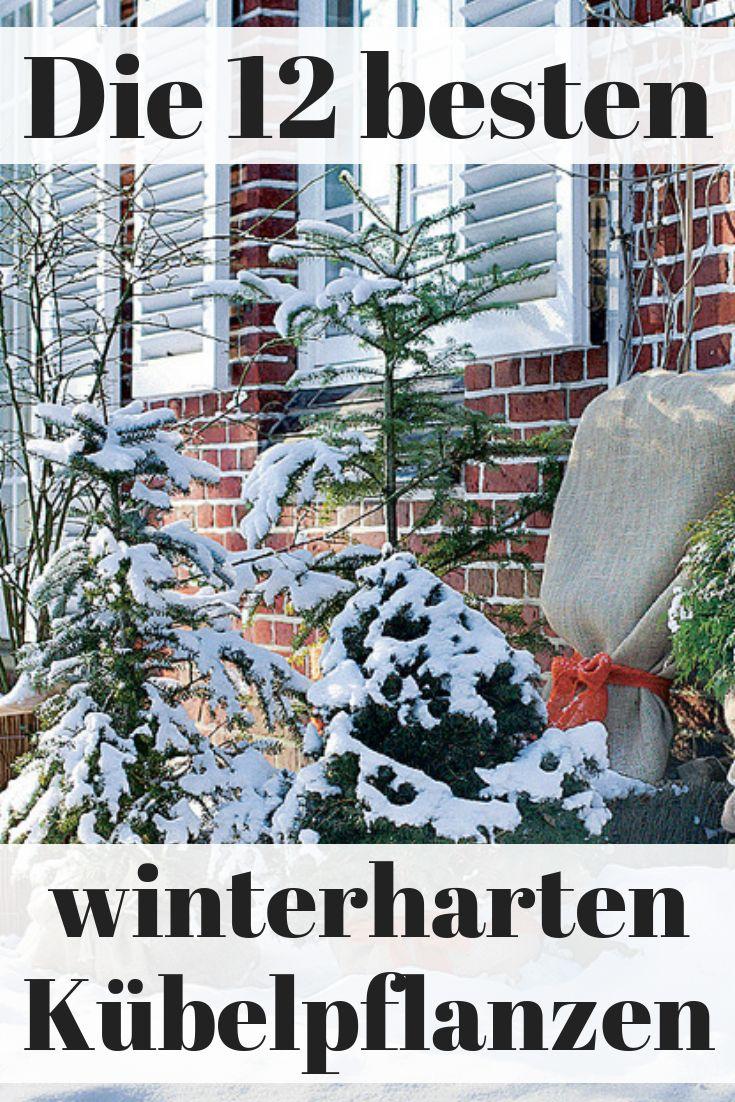 winterharte k belpflanzen garten winterfest machen. Black Bedroom Furniture Sets. Home Design Ideas