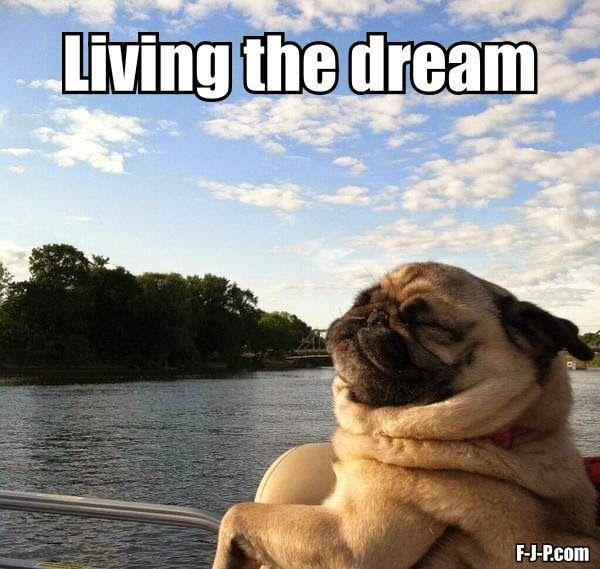 Funny Pug Dog Living The Dream