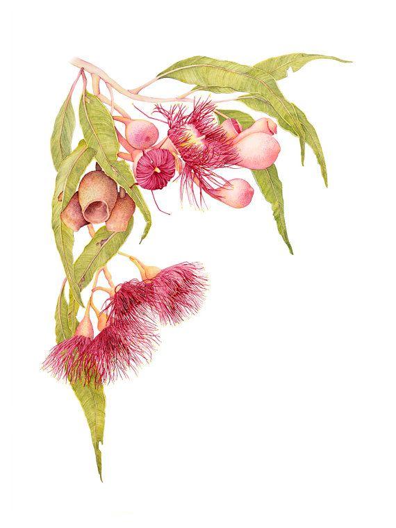 Red Flowering Gum Botanic Fine Art Print 12 x 16 by kateknottart
