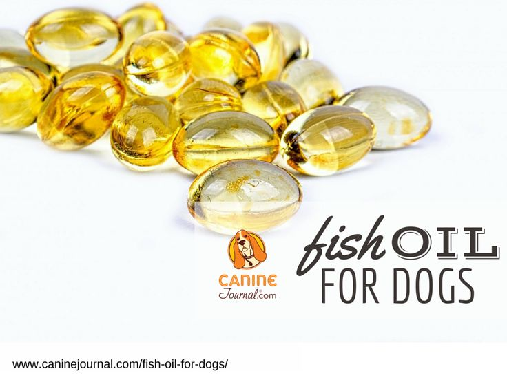 1000 ideas about fish oil benefits on pinterest fish for Fish oil for dogs
