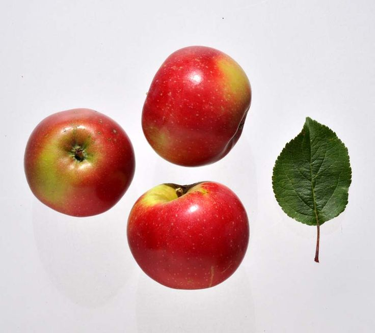 Æblesorten Aroma, Aroma æbler med blad