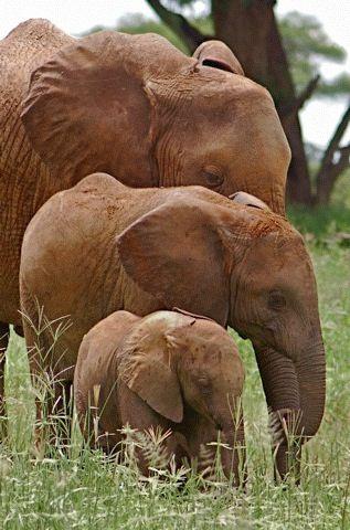 Family Tree - Tanzania, Africa