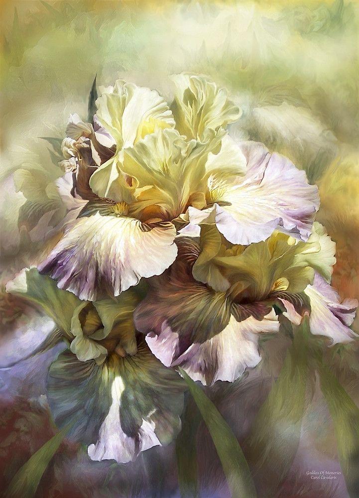 Iris - Goddess Of Memories Carol Cavalaris