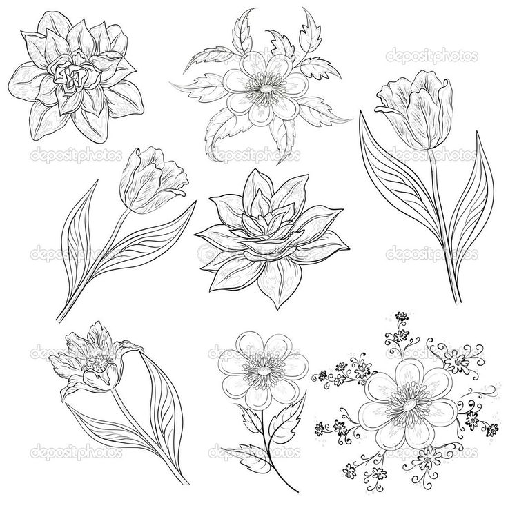 tulip drawing outline - Google Search