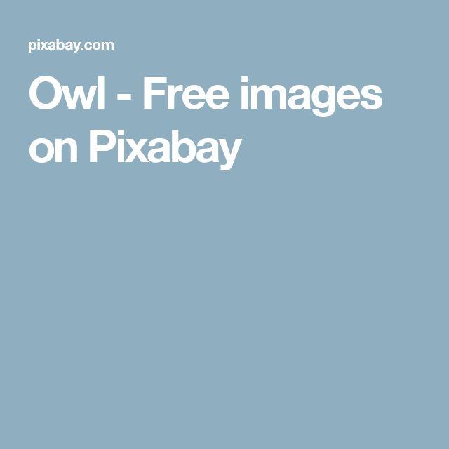 Owl - Free images on Pixabay