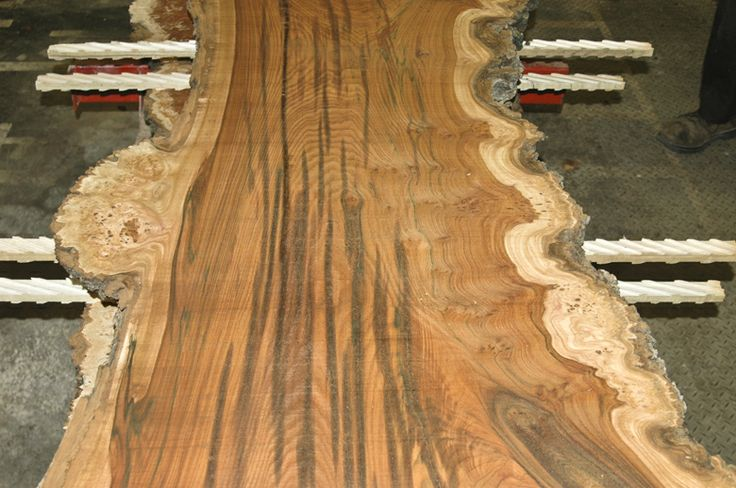English Wych Elm Log Nice Tight Burl Clusters Along The
