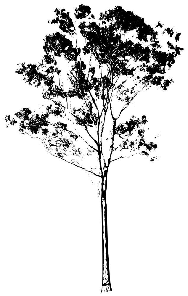 Eucalyptus Gum Tree Silhouette Australia
