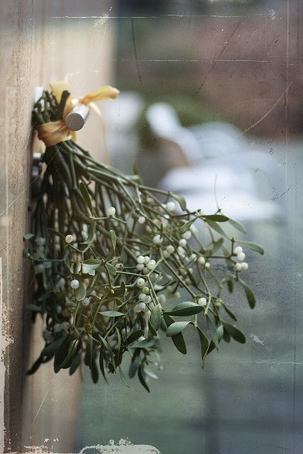Christmas | Xmas | Jul | Noel. Natural Decoration, Mistletoe