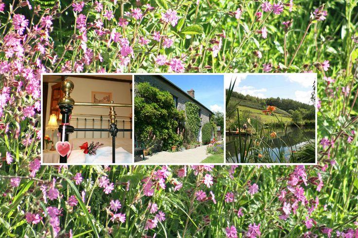 Huxtable Farm B&B quality en-suite accommodation, West Buckland, situated between Barnstaple & South Molton, near Exmoor, Devon