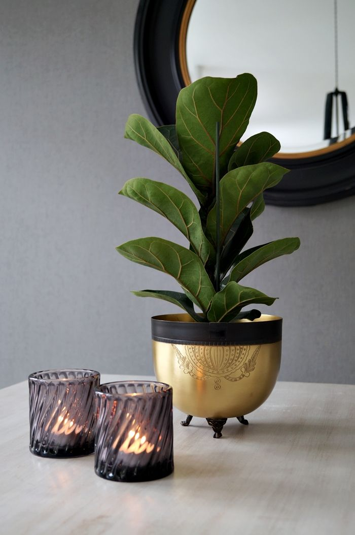 ... For the Home  Pinterest  Fiddle Fig, Unique Plants and Plant Pots