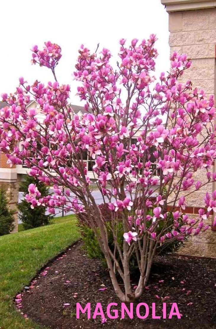 Tree borers amp bark beetles arborx tree health care - 20 Best Beautiful Fragrant Flowers In The World