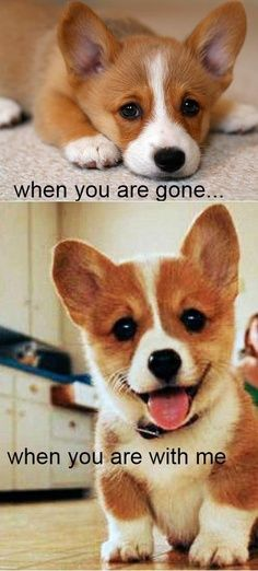 I feel like this dog when we aren't together and when we are. LOL