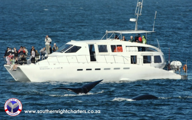 www.southernrightcharters.co.za  Boat Based whale watching- Hermanus- South Africa