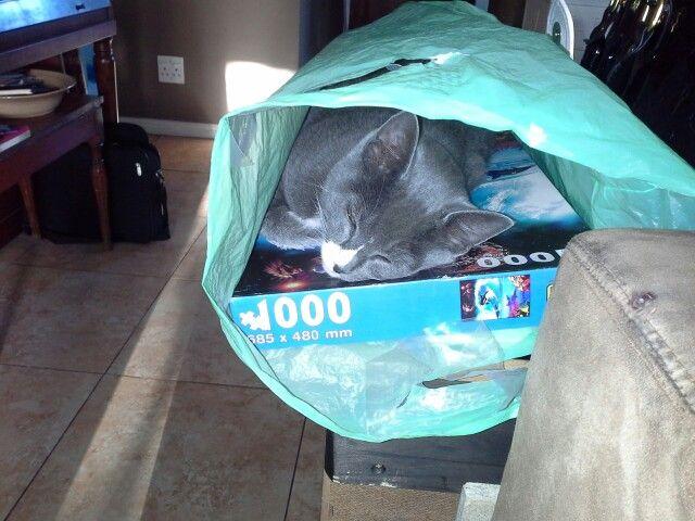 Found another weird spot to sleep when he was still little ♡