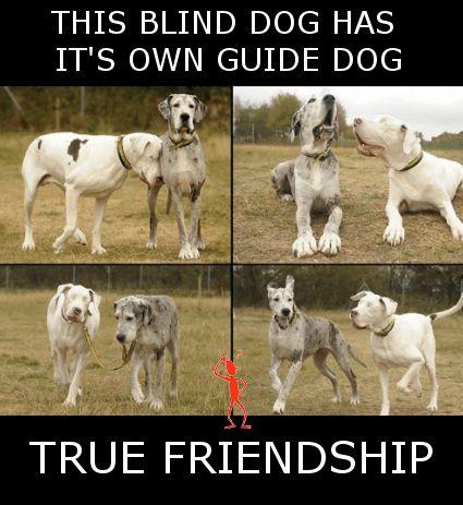 True Friendship... #Amazingthings #Friendsforever