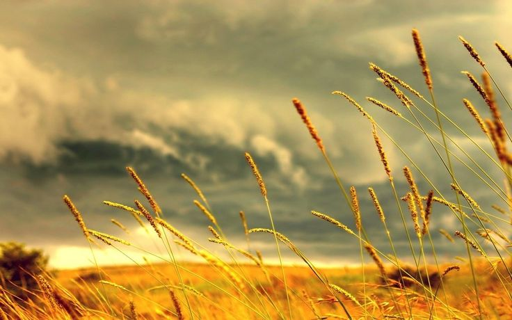 """o pro[fé]ta: DEUS PROVERÁ Quando tu te dispões a entregar esse """"Isaque"""" de coração, Deus providencia algo que o substitua, algo melhor.  Deus providencia esse cordeiro na tua vida. Seja na tua vida financeira, na tua vida sentimental, na tua vida espiritual, Deus provê o escape.   http://jeova-rohi.blogspot.pt/2012/09/deus-provera.html"""