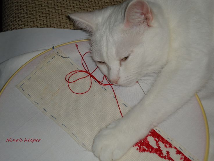 the quilter's work is the cat's property...