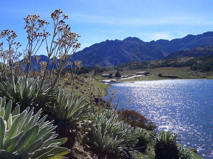 Image result for Flora de los páramos de Venezuela (Mérida, Universidad de los Andes.