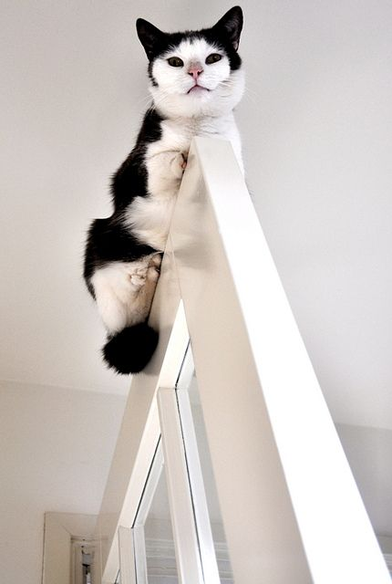 """""""The reason cats climb is so they can look down on almost any other animal...that's also the reason they hate birds."""" --K C Buffington"""