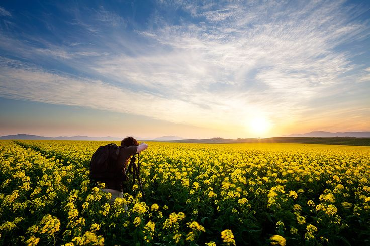 landscape photograph of a photographer in canola fields in the overberg