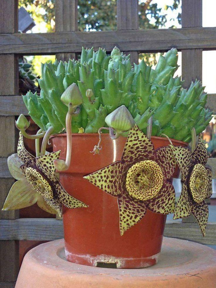 Best 25 Succulents ideas on Pinterest