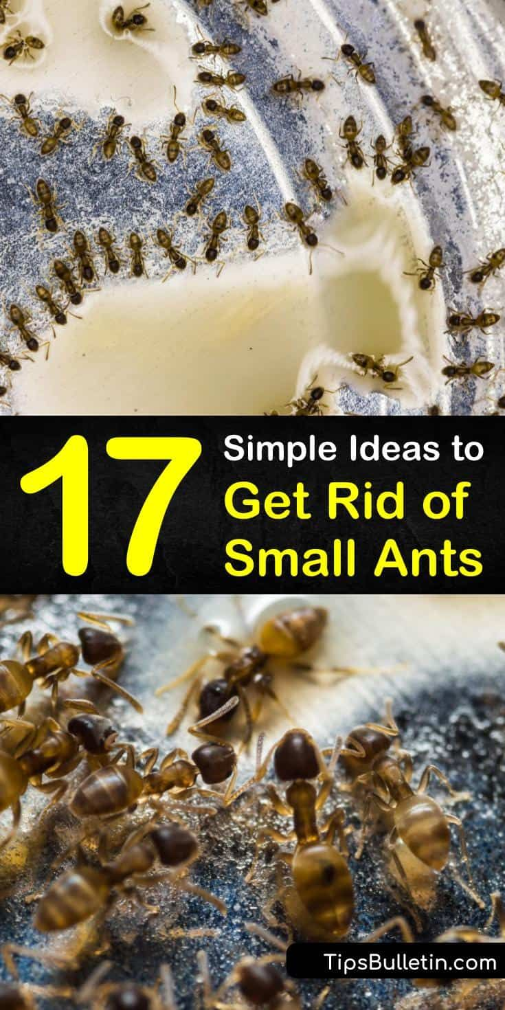 9e25d7a53432d1585b743f66cce3aca1 - How To Get Rid Of Tiny Ants In Bathroom