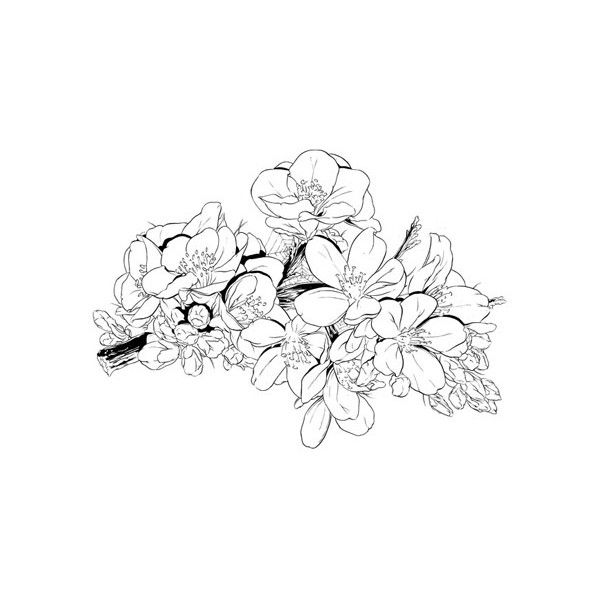 Photo Liked On Polyvore Featuring Fillers Drawings Doodles Flowers Backgrounds Text Effects Quotes Ou Drawings Polyvore Collage Illustration Sketches