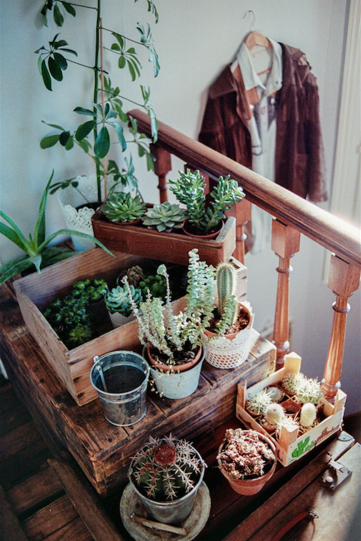 cacti!!!   Love the use of old crates to create a multi-level plant display!  See these all the time at the antique stores- time to look for some cheap ones and pick them up!