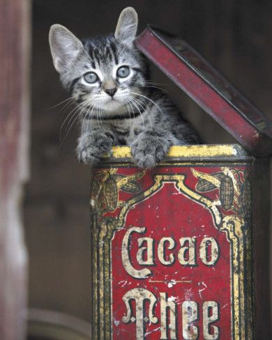 .Kitty in a old tin.