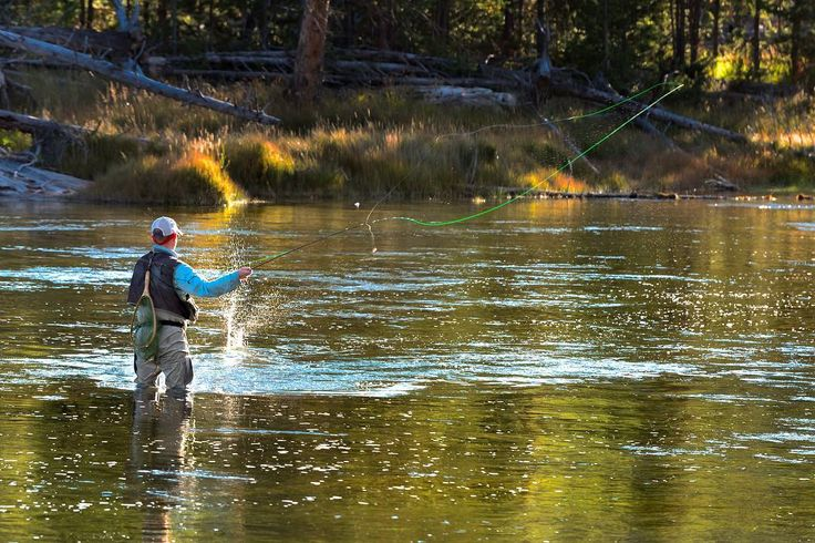 Fly fishing the Madison river in Yellowstone Park in the late afternoon light #flyfishing #madisonriver #yellowstonenationalpark #yellowstone#fishing #river