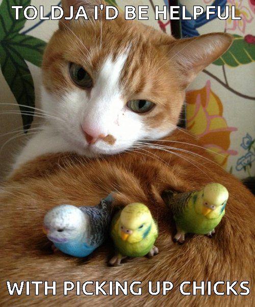 Lucky Bird Poop Maze and Cats W Birds - PC Casino Games   PC Casino Games