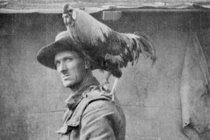 Australian Soldier,Walter Farrell with his unit's mascot,a rooster named 'Jack' in 1916.