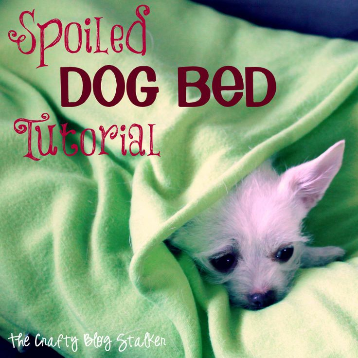 Spoiled Dog!  Blanket Dog Bed Tutorial ♥ www.thecraftyblogstalker.com