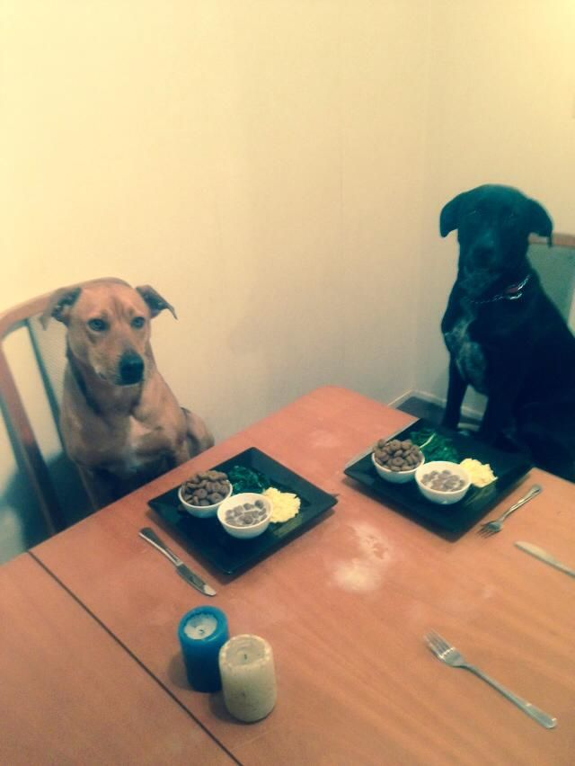 The waiters need feeding too.. nutritious kibble two ways - fresh and drizzled with warm cows milk w/ a side of steamed spinach  sauteed eggs.