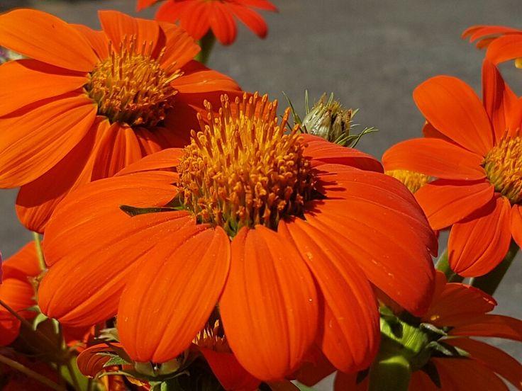 Wild flowers Ladysmith South Africa