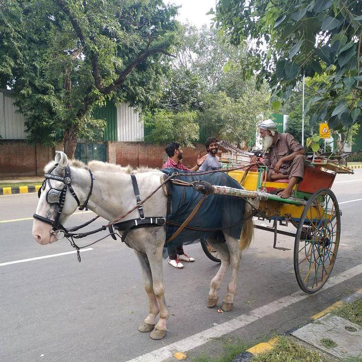 Делийский извозчик               #Индия #Дели #бричка # ...  извозчик