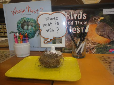 """""""Whose Nest is This?"""" provocation - created when a student brought in a nest she found on her way to school."""