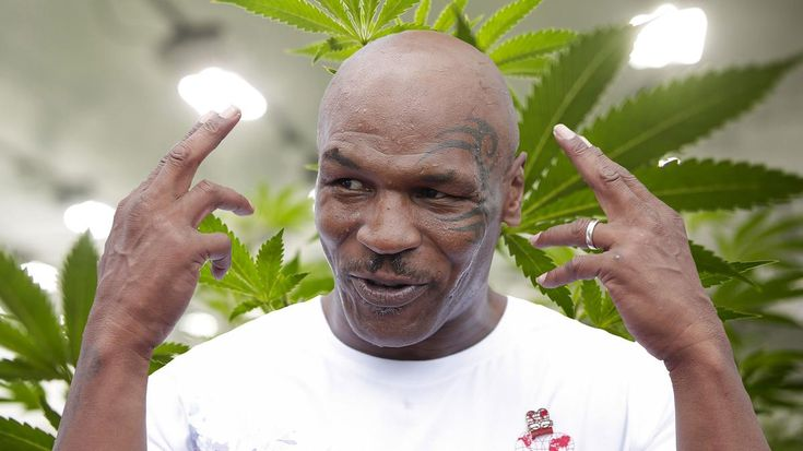 Mike Tyson Is Building a 40-Acre California Weed Resort - VICE