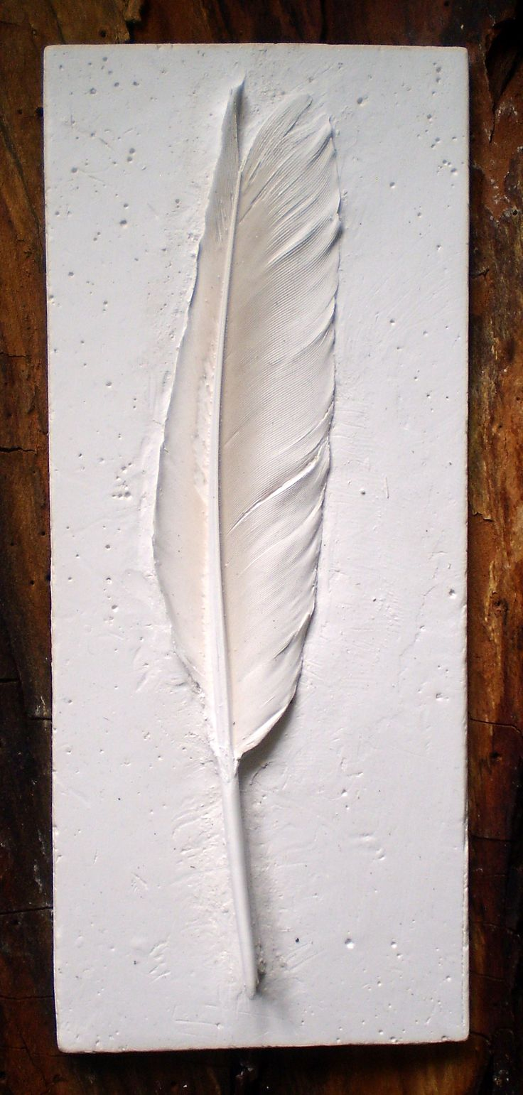 Mostly complete plaster cast of a feather