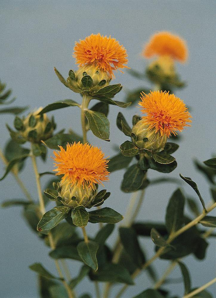 Pin By Michael Jedamski On Apartment Herb Gardens In 2020 Flower Identification Flower Seeds Orange Flowers