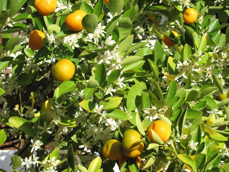 In area as pristine as ours, fruit trees add colour to the cheer. #oudtshoorn #smalltown #travel #nature #countryside #karoo #kleinkaroo #littlekaroo #guesthouse