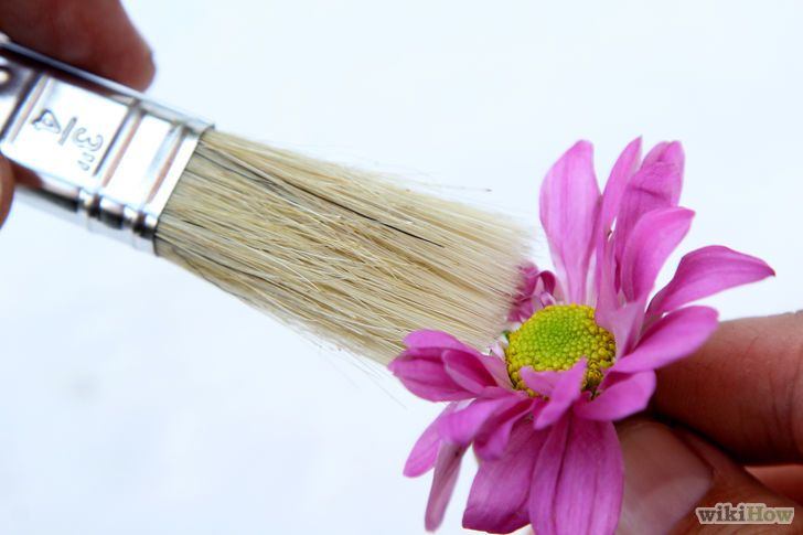 8 Cepilla el desecante. Ahora que el recipiente ya está frío, inclínalo suavemente para exponer las flores. Sácalas cuidadosamente, sujetándolas desde la base. Cepíllalas con un cepillo fino. De manera opcional, consérvalas con laca o sellador floral.