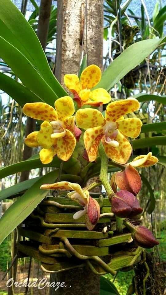 Les 1623 meilleures images du tableau orchidee sur for Entretien plantes jardin