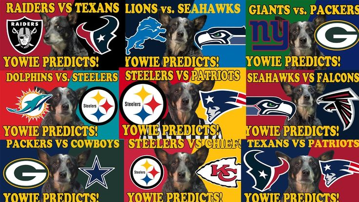 As of last night my dog officially has a perfect prediction record for the 2017 NFL Playoffs. https://www.youtube.com/watch?v=jFFjkkmL83Q&feature=youtu.be&list=PL3KIIr7EEe5niLp_5tGfHMP87ploIsl2L