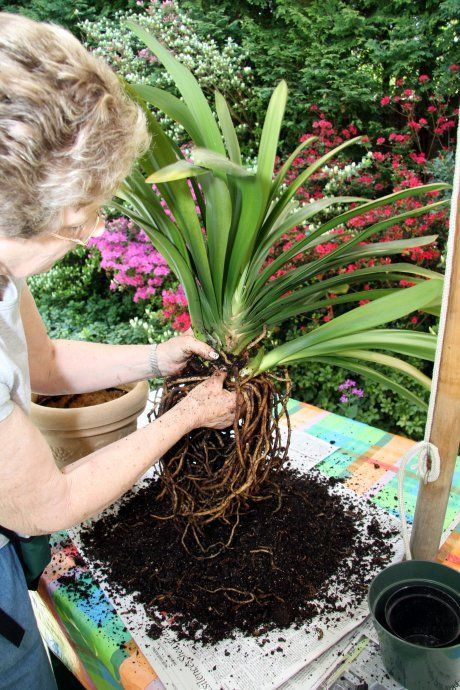 How to love (but not too much) and cherish your new, well-earned clivia.