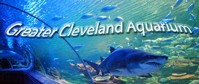 53 Best Images About Cleveland Ohio On Pinterest
