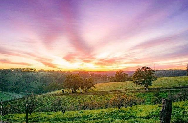 Picture perfect sunrise at Clarendon  Photo by @_shav_bird_photography