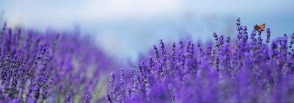 Лавандовые поля в Крыму #Туризм #Путешествия #Мир #Отдых #Страны http://travelito.ru/