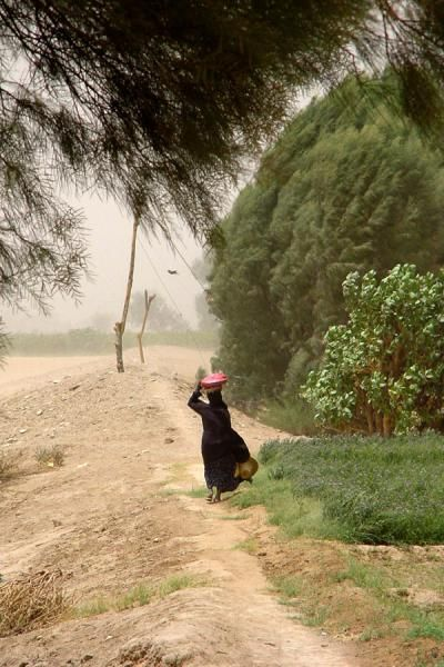 Woman struggling against the elements near Marib | Yemeni People | Yemen