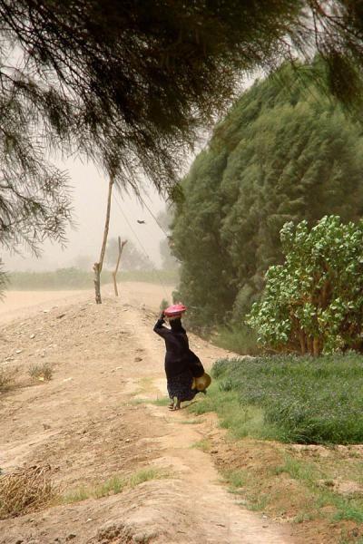 Woman struggling against the elements near Marib | Yemeni People | Yemen